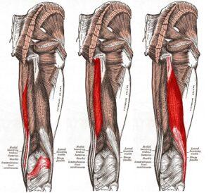 Tylna grupa mięśni uda